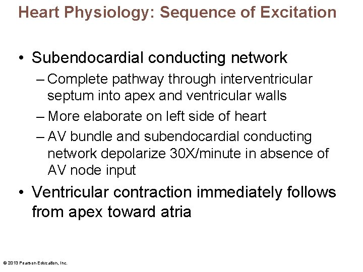 Heart Physiology: Sequence of Excitation • Subendocardial conducting network – Complete pathway through interventricular