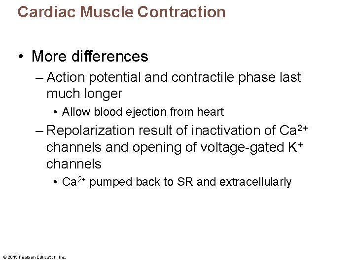 Cardiac Muscle Contraction • More differences – Action potential and contractile phase last much