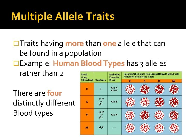 Multiple Allele Traits �Traits having more than one allele that can be found in