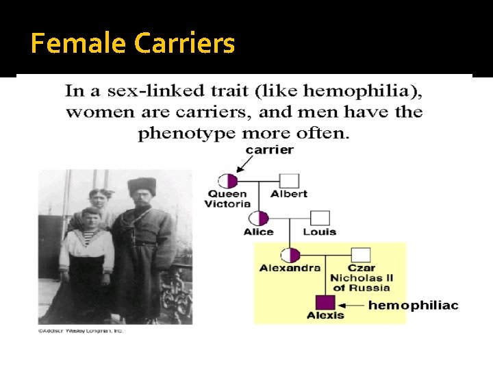 Female Carriers