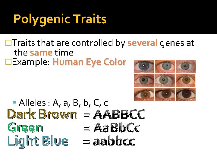Polygenic Traits �Traits that are controlled by several genes at the same time �Example: