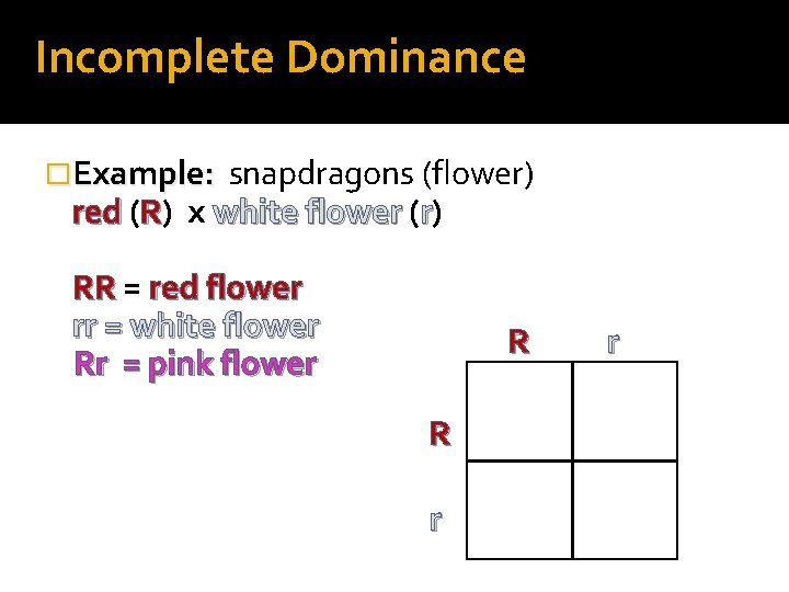 Incomplete Dominance �Example: snapdragons (flower) red (R) x white flower (r) RR = red