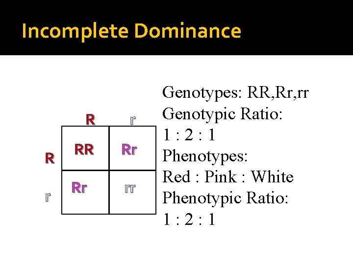 Incomplete Dominance R r RR Rr Rr rr Genotypes: RR, Rr, rr Genotypic Ratio: