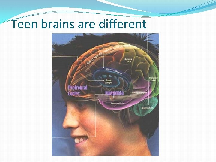 Teen brains are different