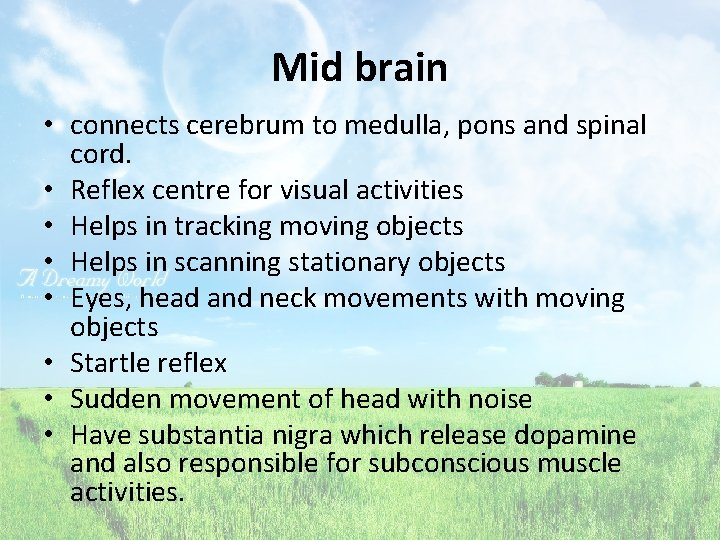 Mid brain • connects cerebrum to medulla, pons and spinal cord. • Reflex centre