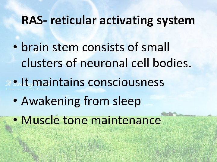 RAS- reticular activating system • brain stem consists of small clusters of neuronal cell