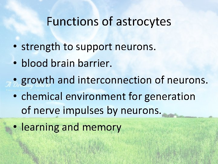 Functions of astrocytes strength to support neurons. blood brain barrier. growth and interconnection of