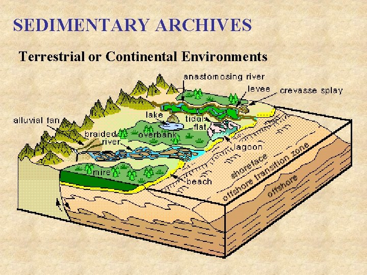 SEDIMENTARY ARCHIVES Terrestrial or Continental Environments