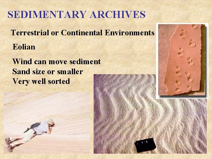 SEDIMENTARY ARCHIVES Terrestrial or Continental Environments Eolian Wind can move sediment Sand size or