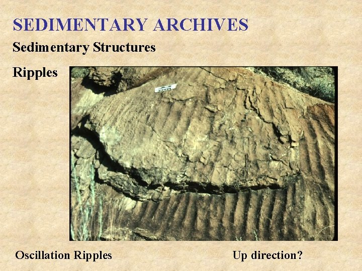 SEDIMENTARY ARCHIVES Sedimentary Structures Ripples Oscillation Ripples Up direction?