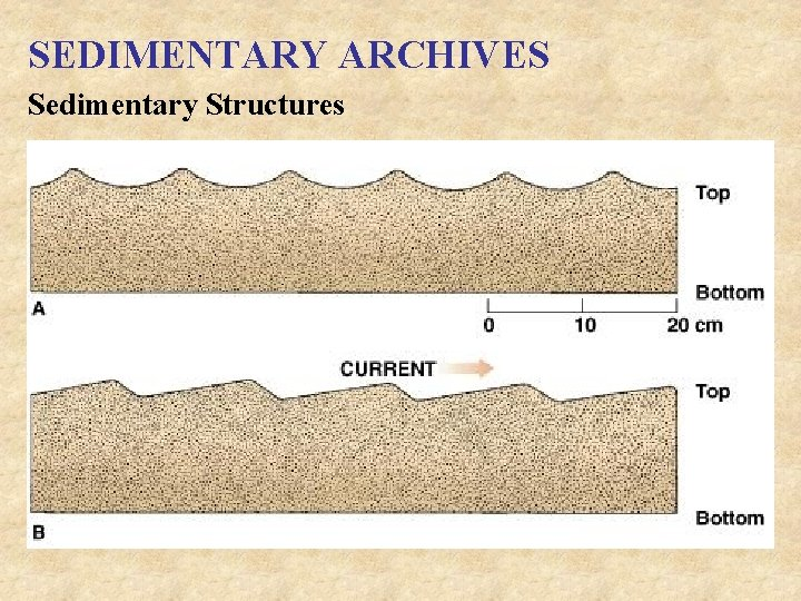 SEDIMENTARY ARCHIVES Sedimentary Structures