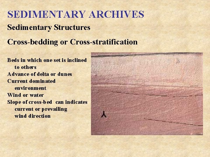 SEDIMENTARY ARCHIVES Sedimentary Structures Cross-bedding or Cross-stratification Beds in which one set is inclined