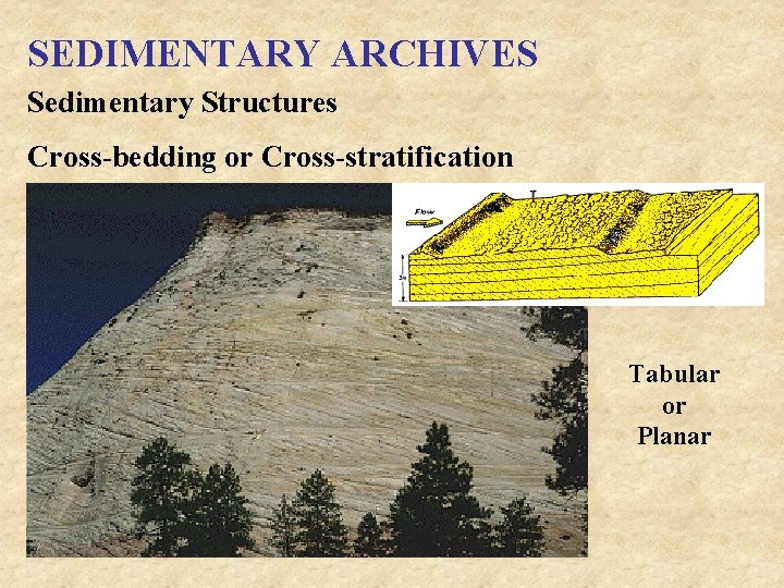 SEDIMENTARY ARCHIVES Sedimentary Structures Cross-bedding or Cross-stratification Tabular or Planar
