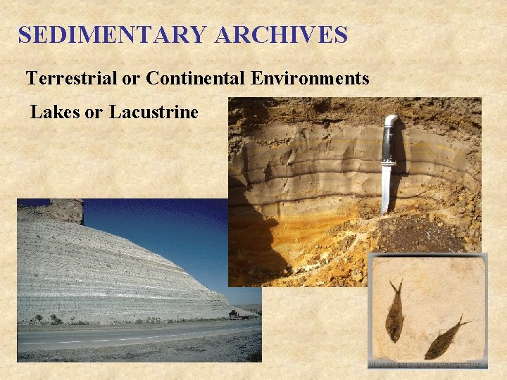 SEDIMENTARY ARCHIVES Terrestrial or Continental Environments Lakes or Lacustrine