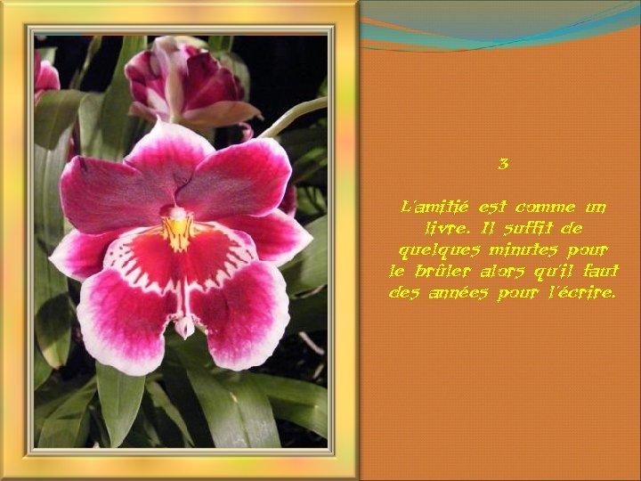3 L'amitié est comme un livre. Il suffit de quelques minutes pour le brûler
