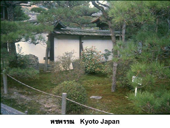 พชพรรณ Kyoto Japan