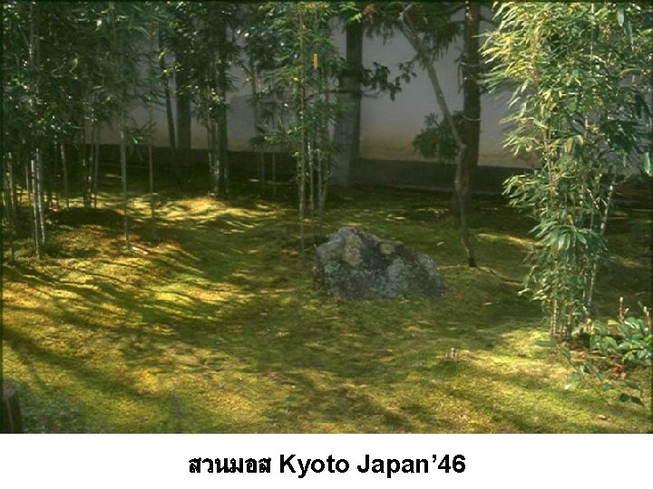 สวนมอส Kyoto Japan' 46