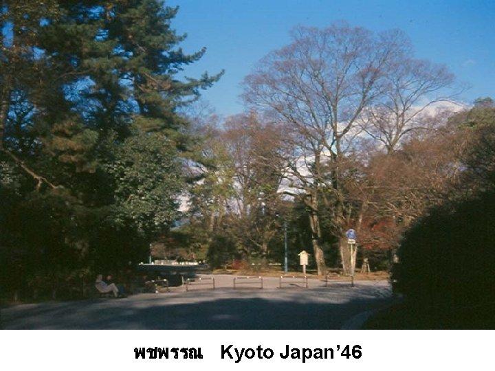 พชพรรณ Kyoto Japan' 46