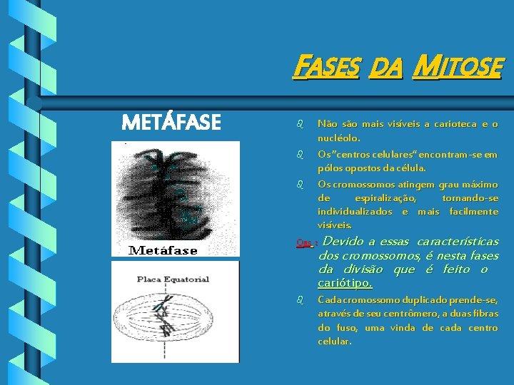FASES DA MITOSE METÁFASE b b b Não são mais visíveis a carioteca e