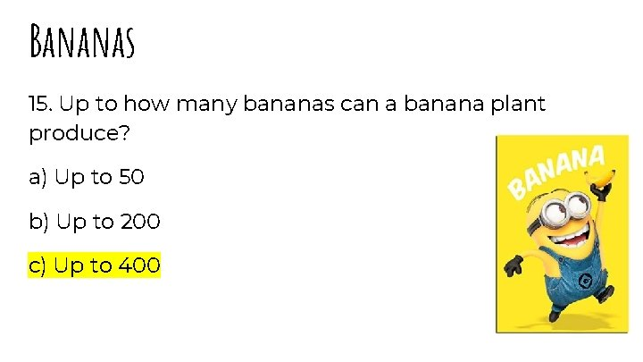 Bananas 15. Up to how many bananas can a banana plant produce? a) Up