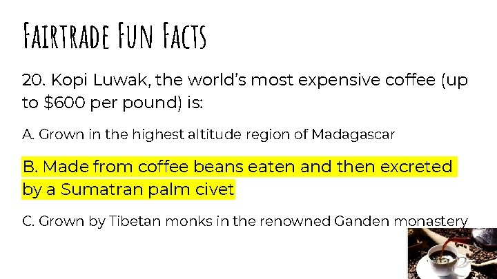 Fairtrade Fun Facts 20. Kopi Luwak, the world's most expensive coffee (up to $600