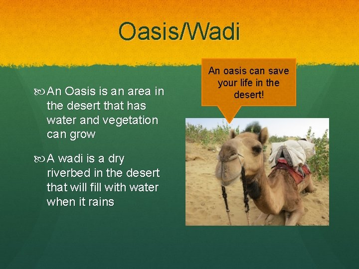 Oasis/Wadi An Oasis is an area in the desert that has water and vegetation