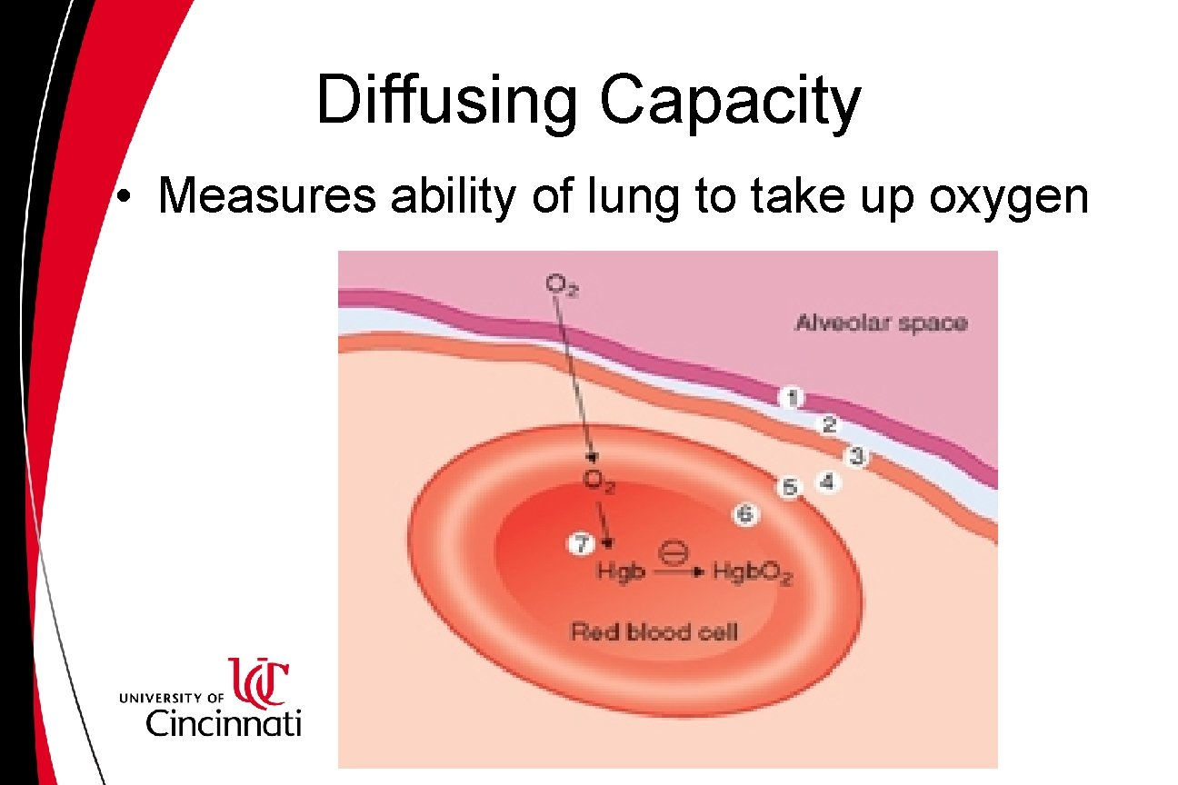Diffusing Capacity • Measures ability of lung to take up oxygen