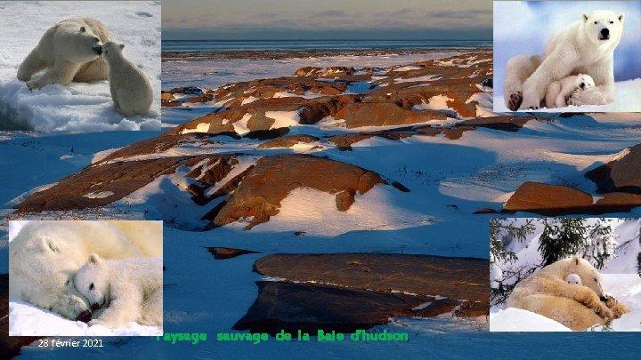 28 février 2021 Paysage sauvage de la Baie d'hudson
