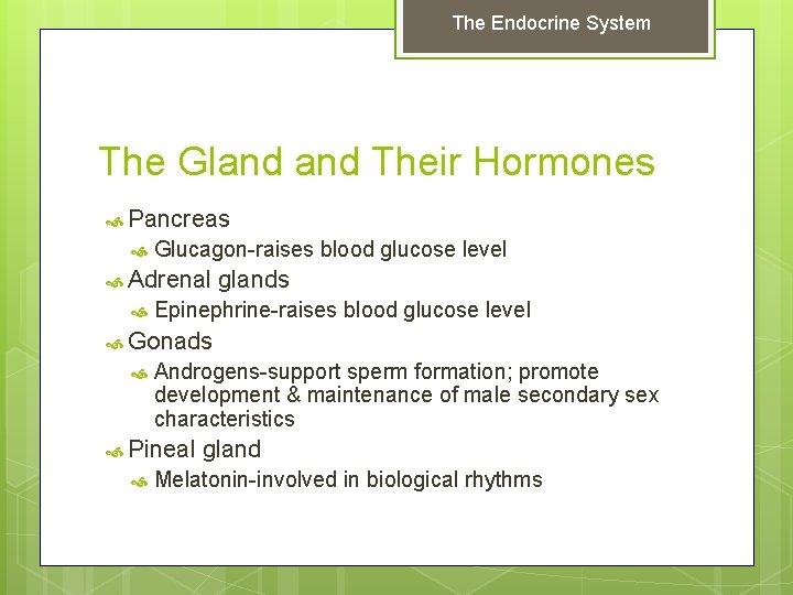 The Endocrine System The Gland Their Hormones Pancreas Glucagon-raises blood glucose level Adrenal glands