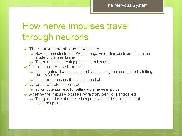 The Nervous System How nerve impulses travel through neurons The neuron's membrane is polarized