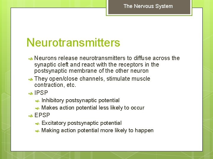 The Nervous System Neurotransmitters Neurons release neurotransmitters to diffuse across the synaptic cleft and