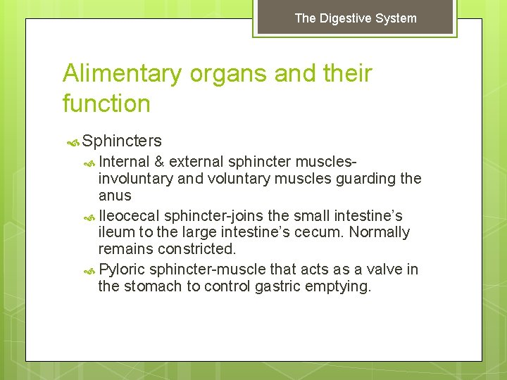 The Digestive System Alimentary organs and their function Sphincters Internal & external sphincter muscles-
