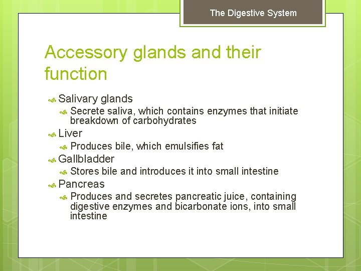 The Digestive System Accessory glands and their function Salivary glands Secrete saliva, which contains