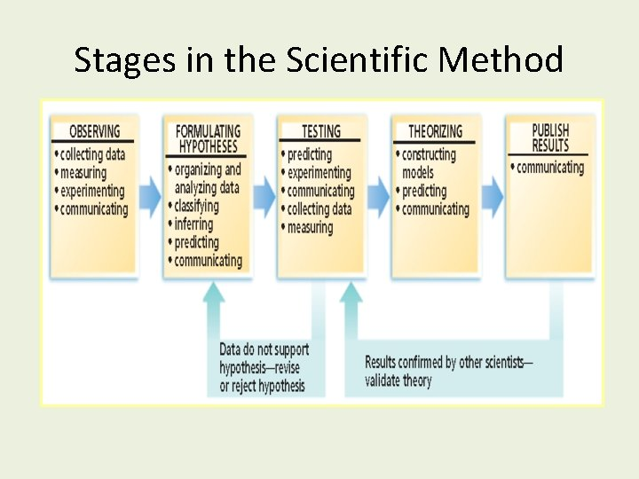 Stages in the Scientific Method