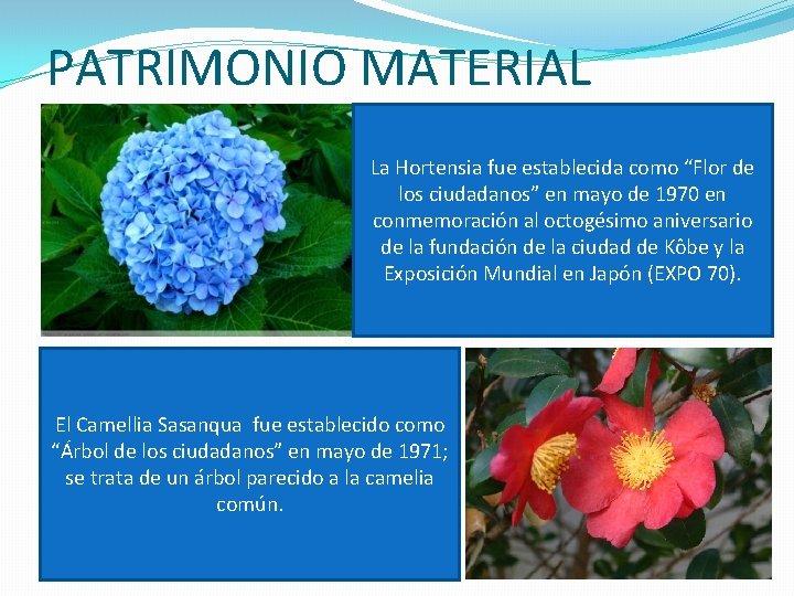 """PATRIMONIO MATERIAL La Hortensia fue establecida como """"Flor de los ciudadanos"""" en mayo de"""