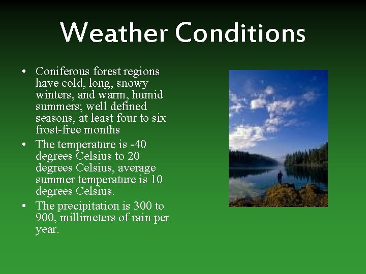 Weather Conditions • Coniferous forest regions have cold, long, snowy winters, and warm, humid