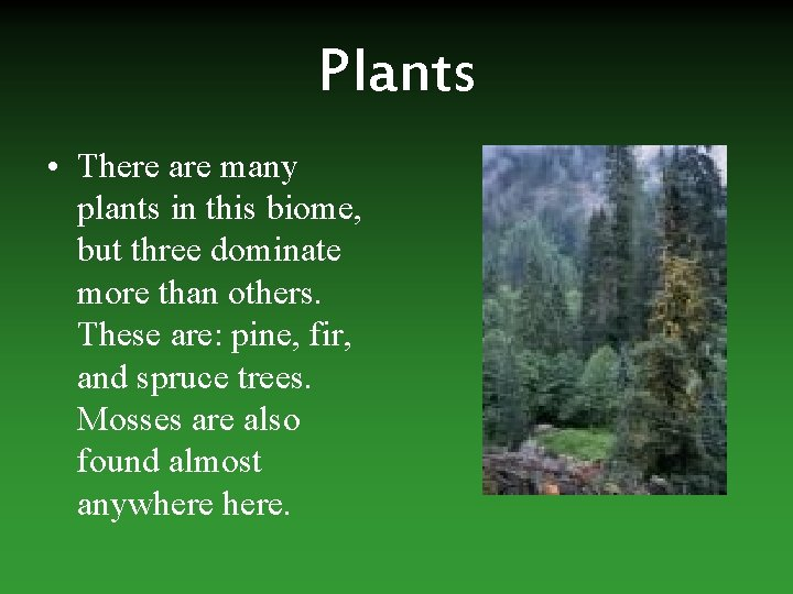 Plants • There are many plants in this biome, but three dominate more than
