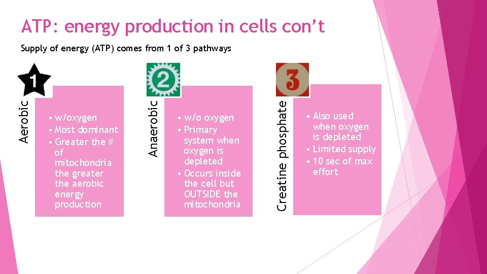 ATP: energy production in cells con't • w/o oxygen • Primary system when oxygen