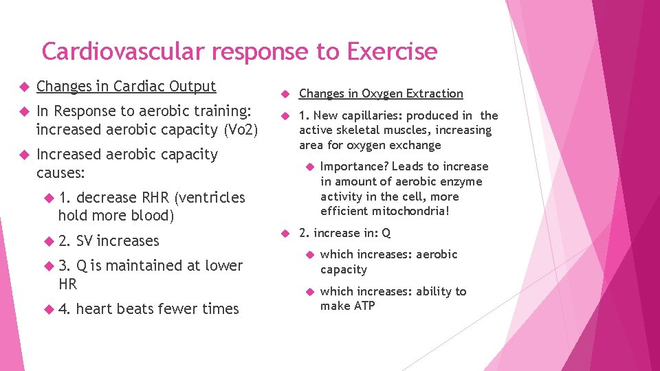 Cardiovascular response to Exercise Changes in Cardiac Output In Response to aerobic training: increased