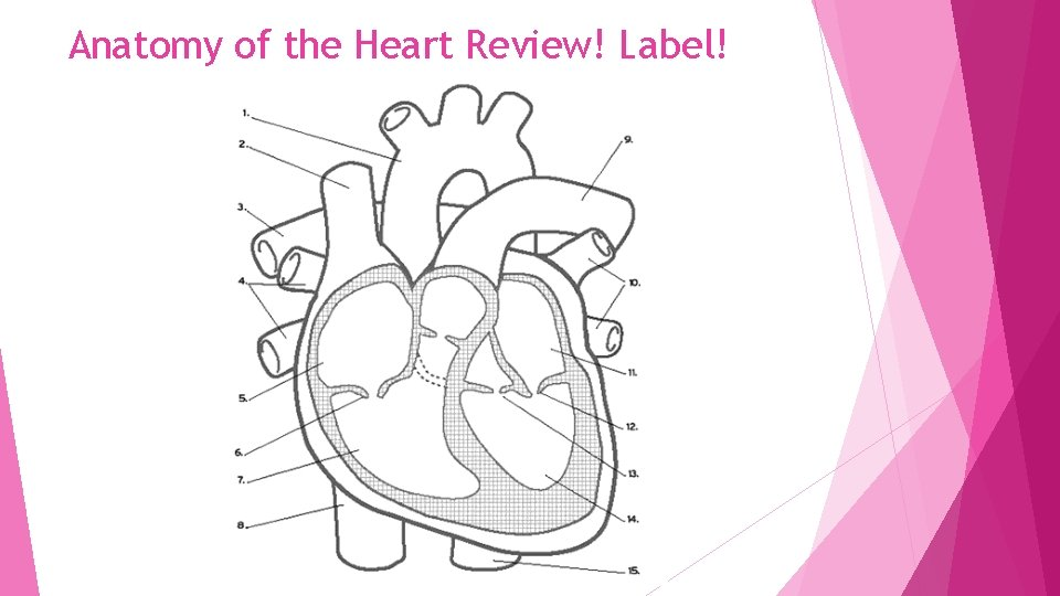 Anatomy of the Heart Review! Label!