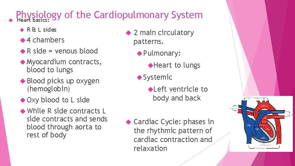 Physiology of the Cardiopulmonary System Heart basics: R & L sides 4 chambers