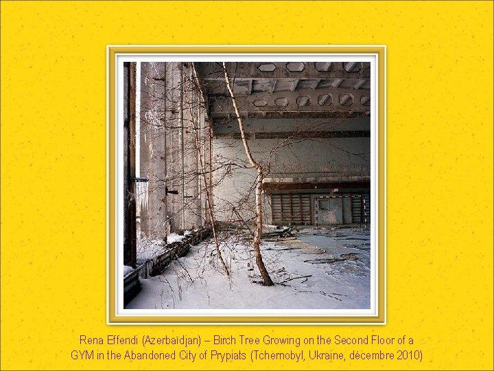 Rena Effendi (Azerbaïdjan) – Birch Tree Growing on the Second Floor of a GYM