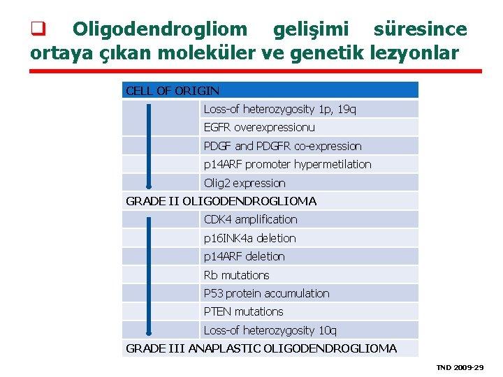 Beyin Tmrlerinin Patogenezi Do Dr Ahmet Bekar Uluda