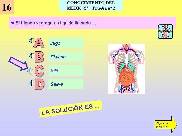CONOCIMIENTO DEL MEDIO-5º Prueba nº 2 16 l El hígado segrega un líquido llamado.