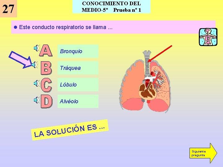 CONOCIMIENTO DEL MEDIO-5º Prueba nº 1 27 l Este conducto respiratorio se llama. .
