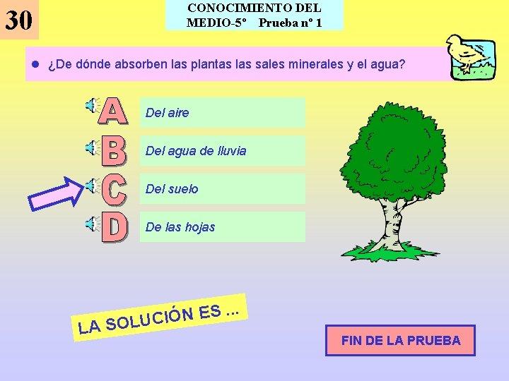 30 CONOCIMIENTO DEL MEDIO-5º Prueba nº 1 l ¿De dónde absorben las plantas las
