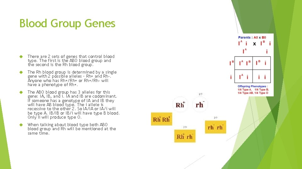 Blood Group Genes There are 2 sets of genes that control blood type. The