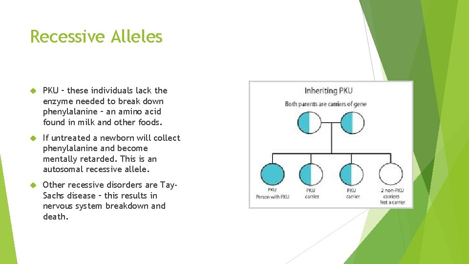 Recessive Alleles PKU – these individuals lack the enzyme needed to break down phenylalanine