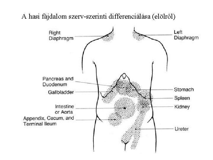 A hasi fájdalom szerv-szerinti differenciálása (elölről)