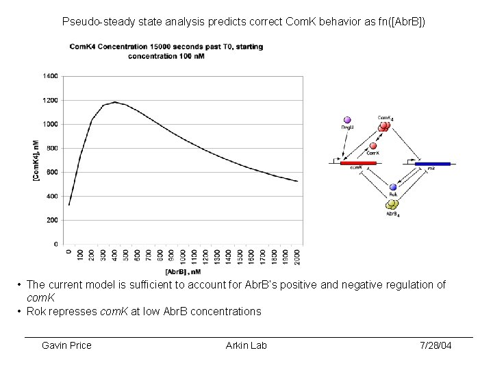 Pseudo-steady state analysis predicts correct Com. K behavior as fn([Abr. B]) • The current